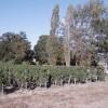 Vignoble de Saint-Emilion