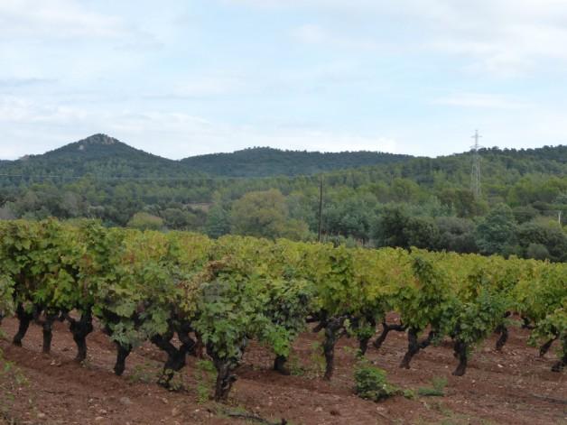 Bordure Maritime Côtes de Provence
